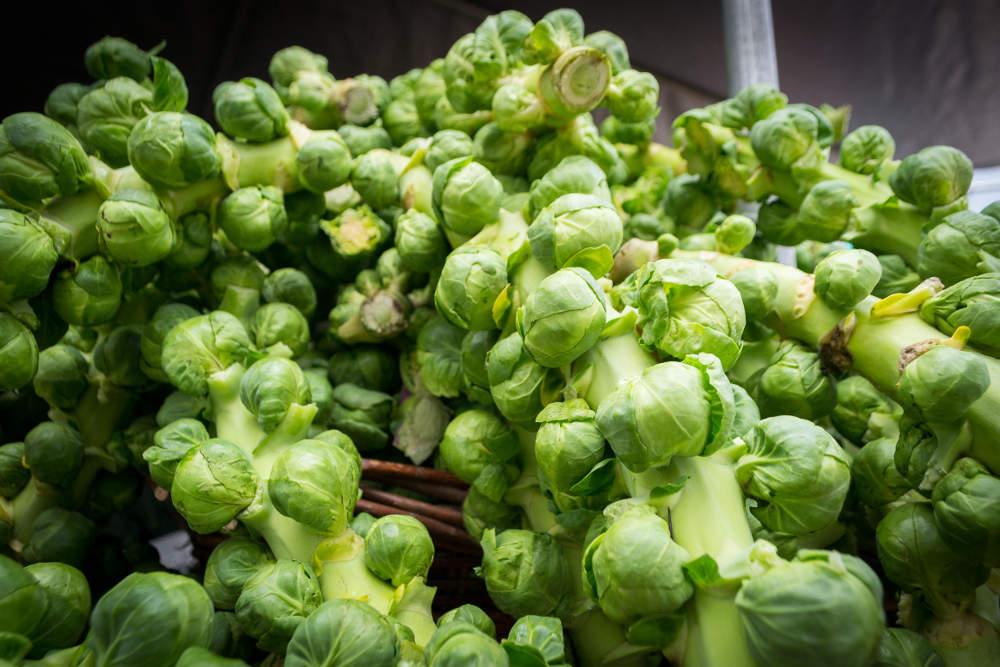 choux de bruxelles | semer, cultiver et récolter au potager