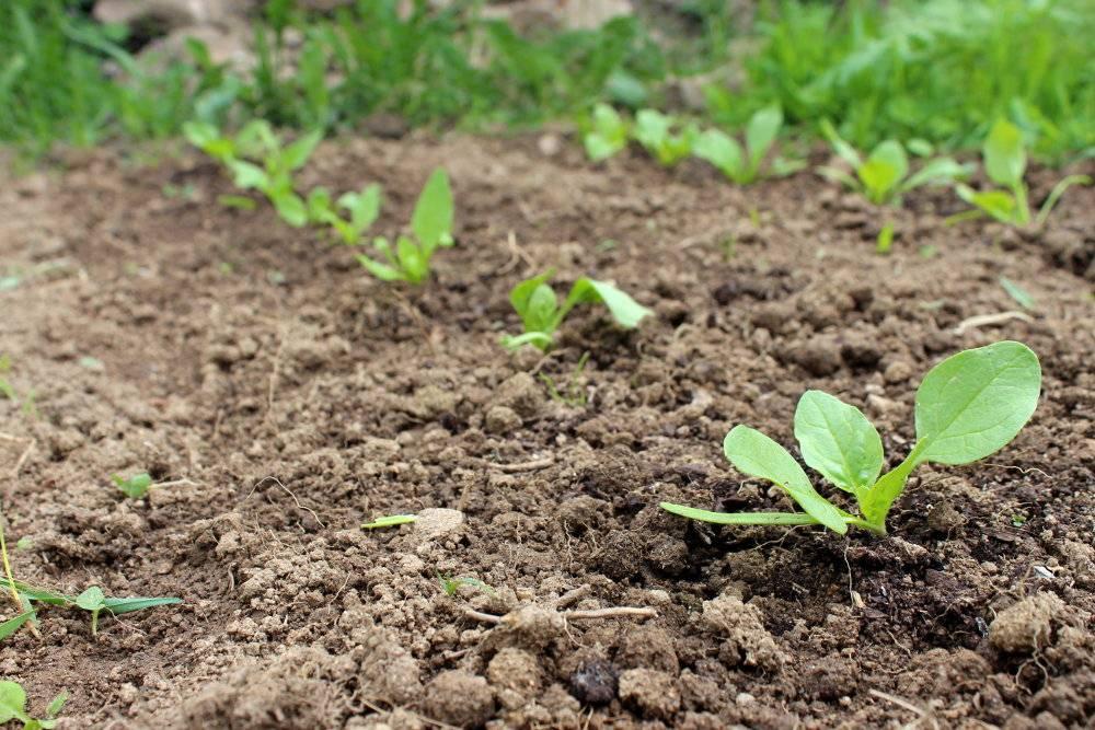 Semis courgettes repiquage en godet de tomate courgette aprs semis en bouteille sous cloche en - Quand cueillir les potirons ...
