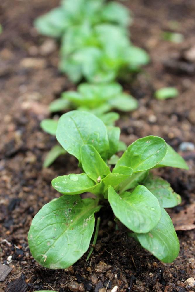 M che semer cultiver et r colter au potager - Quoi semer en aout ...