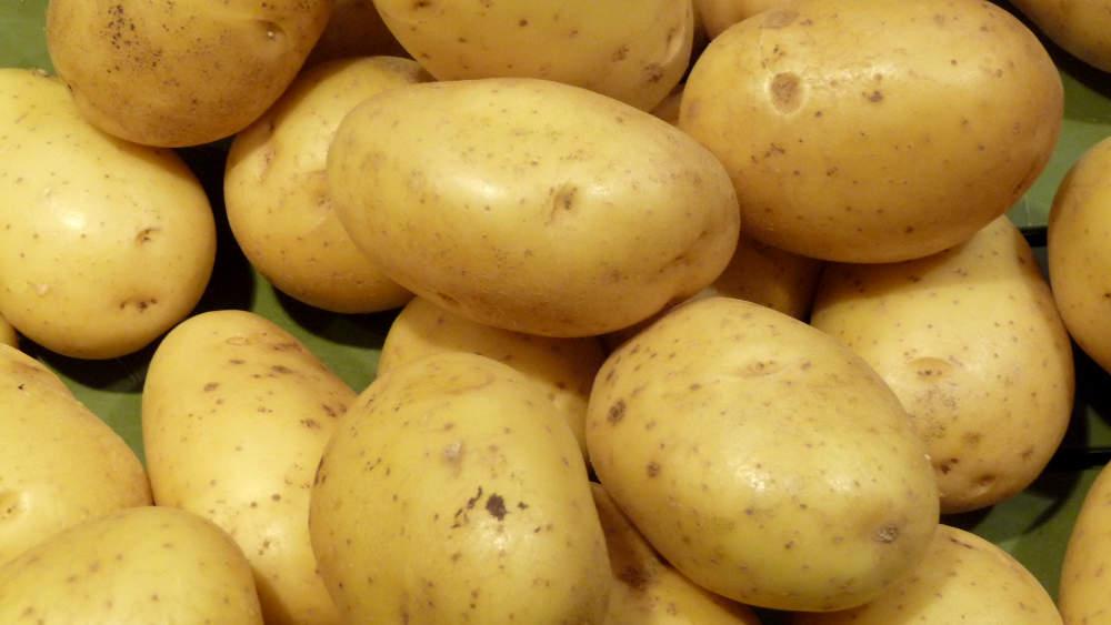 période plantation pomme de terre