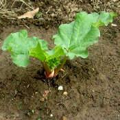 plantation au potager