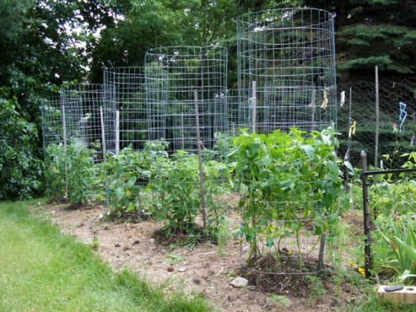 Connu Quels tuteurs utiliser pour vos tomates : piquets, ficelles, cages  WE83