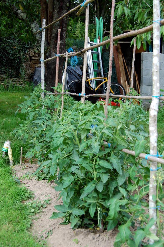 Quels tuteurs utiliser pour vos tomates piquets - Espace entre les pieds de tomates ...