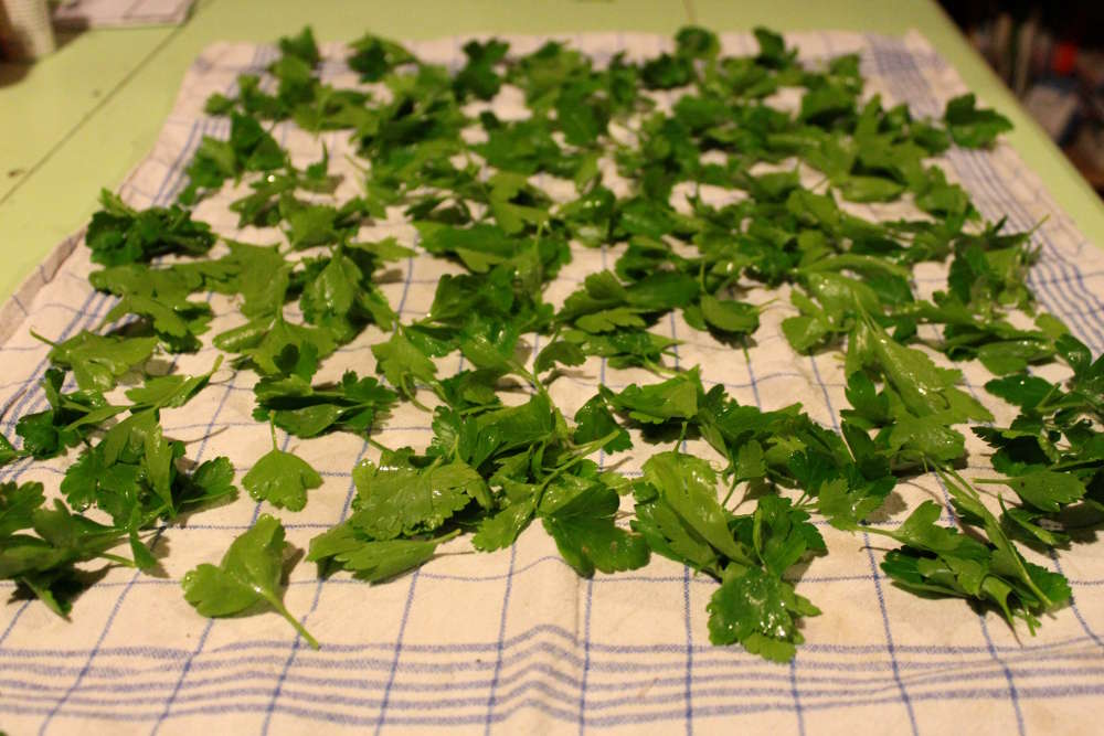 Comment congeler les herbes aromatiques persil menthe for Nettoyer feuilles plantes