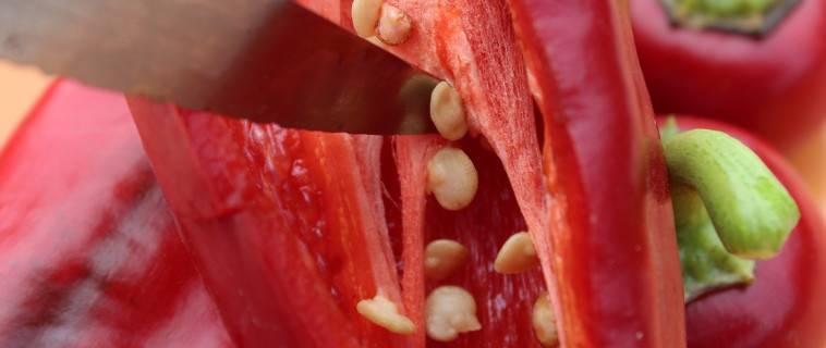 R colter ses graines de poivrons et piments - Faire pousser des graines de poivrons ...
