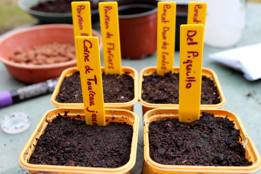comment semer des piments et des poivrons quand et comment r ussir ses semis. Black Bedroom Furniture Sets. Home Design Ideas